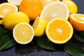Lemon, orange nad grapefruit — Stock Photo