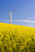 Windmill and rape field — Stockfoto