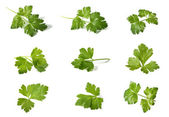 Assorted parsley — Stock Photo