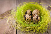 Quail eggs — Stock fotografie