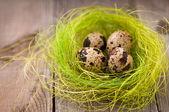 Quail eggs — Стоковое фото