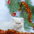 Foto Stock: Branch with New Year s balls and symbol of year 2011 white cat