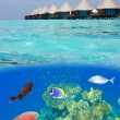 Water villas and the underwater world with small fishes in corals — Stock Photo