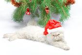 Symbol of year 2011 white cat — Stock Photo