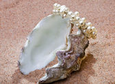 The exotic sea shell with a pearl beads lies on sand — Stock Photo