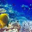 Maldives. The diver at ocean and tropical fishes in corals. — Foto Stock