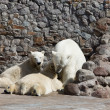 The white she-bear feeds newborn bear cubs with milk — Photo