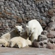 The white she-bear feeds newborn bear cubs with milk — Foto de Stock