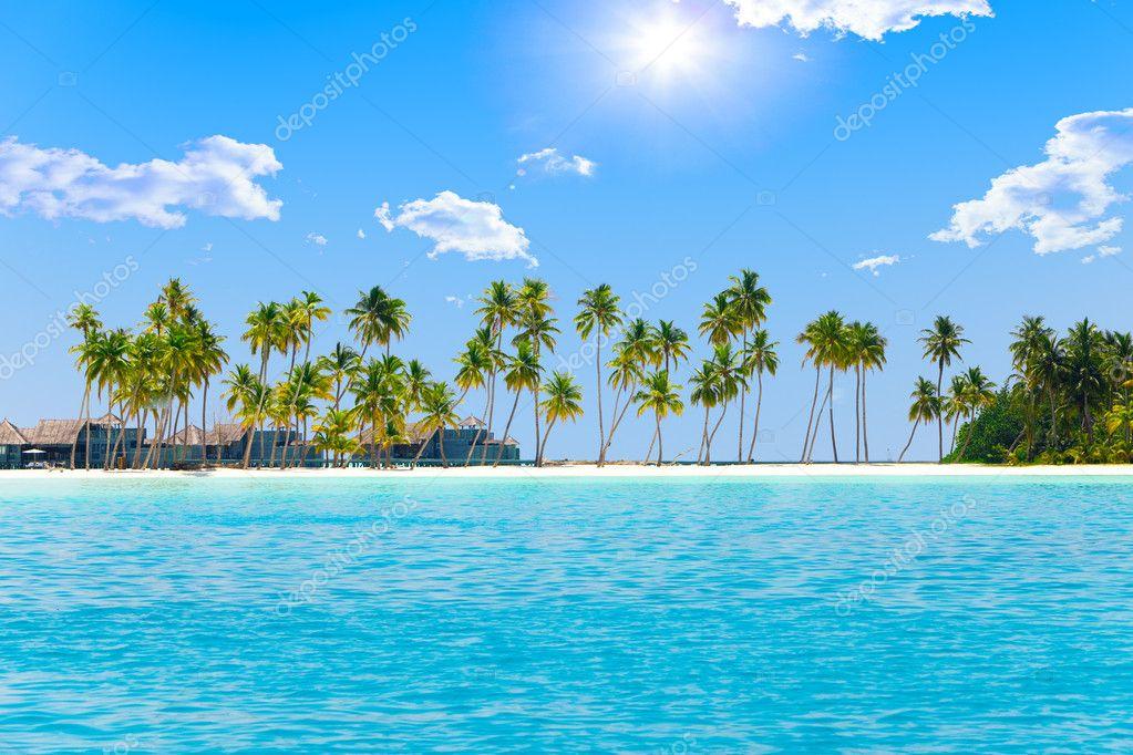 Island Beach Palm Tree Palm Trees on Tropical Island