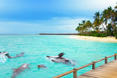 Maldives. Dolphins at ocean and tropical island. — Stock Photo