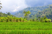 Indonesia. Bali. The tropical nature under the storm sky — Стоковое фото