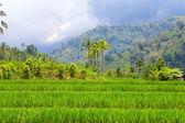 Indonésia. bali. a natureza tropical sob o céu de tempestade — Foto Stock