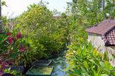 Tropické krajiny. indonésie. bali. — Stock fotografie