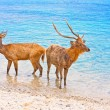 Two deer in ocean - 图库照片