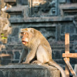 Royalty-Free Stock Photo: Bali,Indonesia. Monkeys in temple.