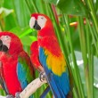 Bright large tropical parrots sit on a branch - Stock Photo