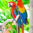 Beautiful colorful parrot — Stock Photo #4833717
