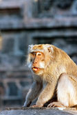 Bali,Indonesia. Monkeys in temple. — Stock Photo