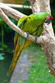 A bright macaw parrot, sitting on a branch. — Stock Photo
