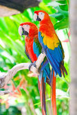 Beautiful colorful parrot — Stock Photo