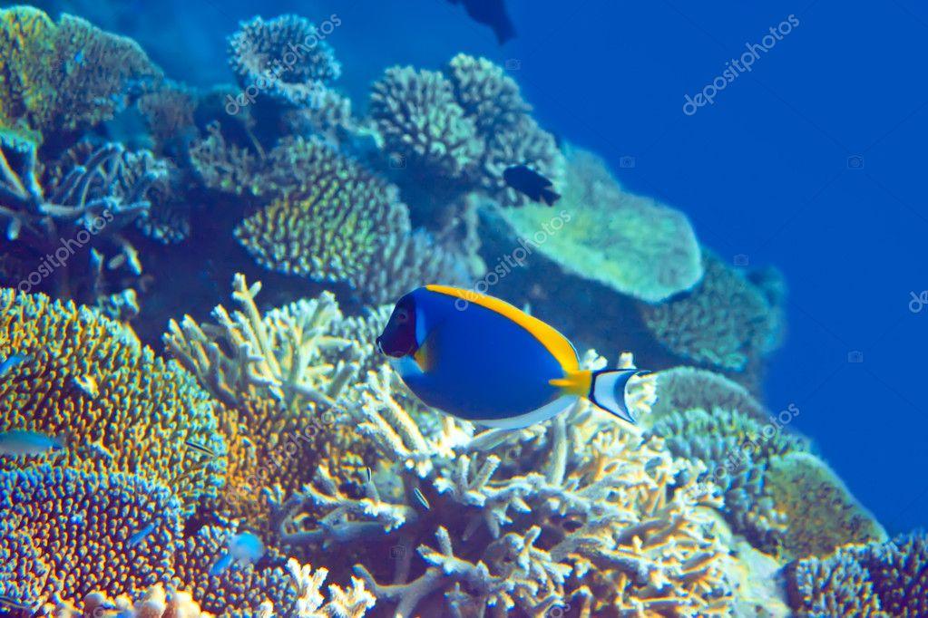 壁纸 海底 海底世界 海洋馆 水族馆 桌面 1023_682
