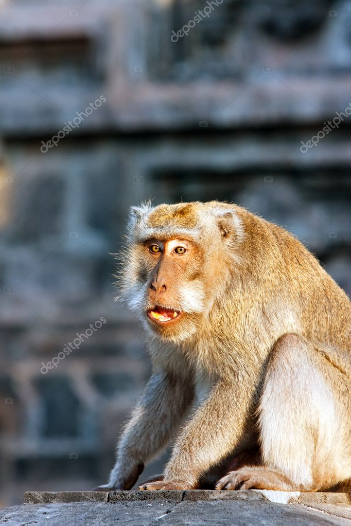 Bali,Indonesia. Monkeys in temple. — Stock Photo #4833618