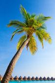 Palm tree on sky background — 图库照片