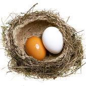 Yuva, çimen yumurta dan bükülmüş — Stok fotoğraf