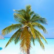 Palm trees on tropical island at ocean. Maldives. — Stock Photo
