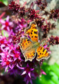 The butterfly Inachis io on a flower — Stock Photo