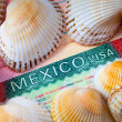 The visa of Mexico and sea cockleshells - the rest concept — Stock Photo