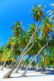 Palmeiras na ilha tropical no oceano. maldivas. — Foto Stock