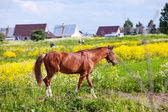 Bay horse on a meadow in a bright sunny day — Stock Photo