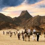 Camel caravan going through desert — Stock Photo