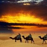 Camel caravan going through desert at sunset — Stock Photo