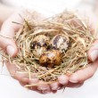 Nest in hand — Stockfoto