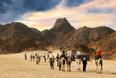 Camel caravan going through desert — Stock Photo