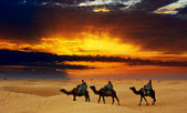 Camel caravan going through desert at sunset — Stock Photo