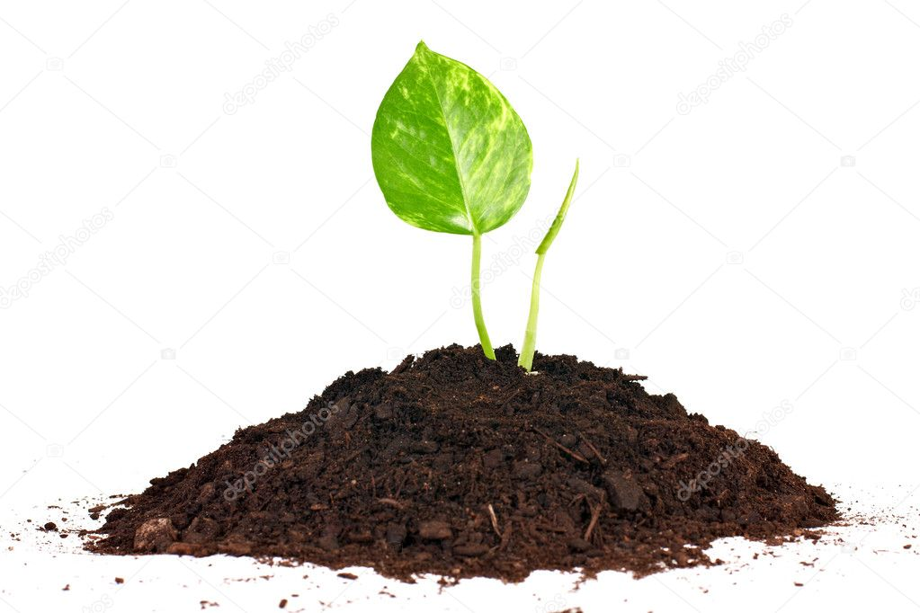 Beginning concept by small plant growth from soil.  Foto de Stock   #3928567