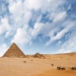 Camel caravan — Stock Photo