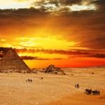 Camel caravan at sunset — Stock Photo