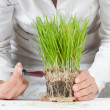 Genetic modified plant — Stock Photo #4688283