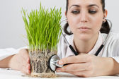 Doctor checked the plant — Stock Photo