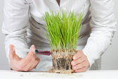 Genetic modified plant — Stock Photo