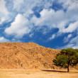 Stock Photo: Lonely tree in the desert
