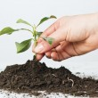Stock Photo: Support small plant