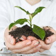Stock Photo: Small plant growing
