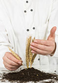 Wheat grows — Stock Photo
