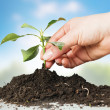 Support small plant — Stock Photo #5319535
