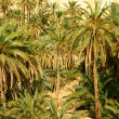 Stock Photo: Palm trees in oasis
